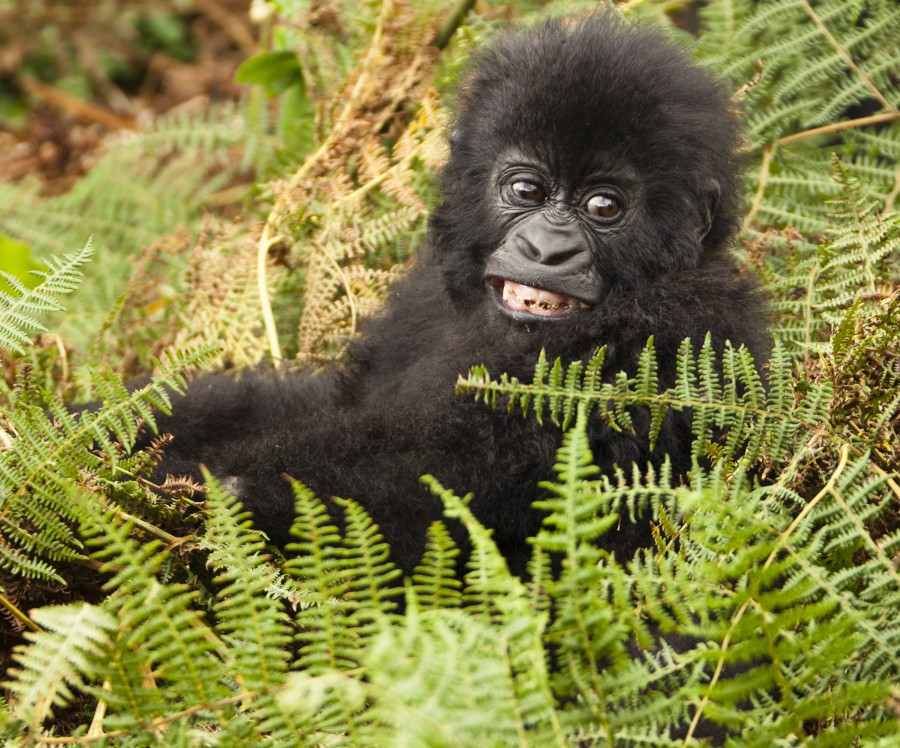 Four Day Gorilla Trekking Experience