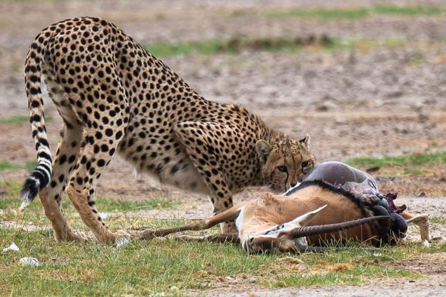 Two Day Safari to Amboseli National Park