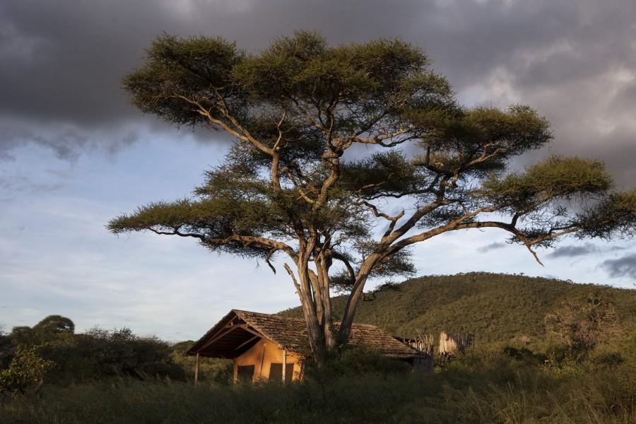 JOIN THE GROUP - Safari from Zanzibar - Mkomazi Day Trip