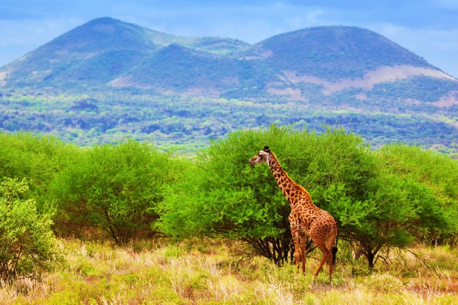 Tsavo East and West National Pa9rk