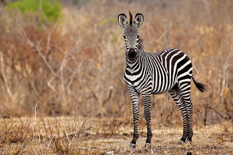 JOIN THE GROUP - Safari from Zanzibar - Mikumi Day Trip