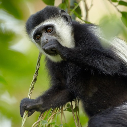 Safari to Arusha National Park - 1 day tour