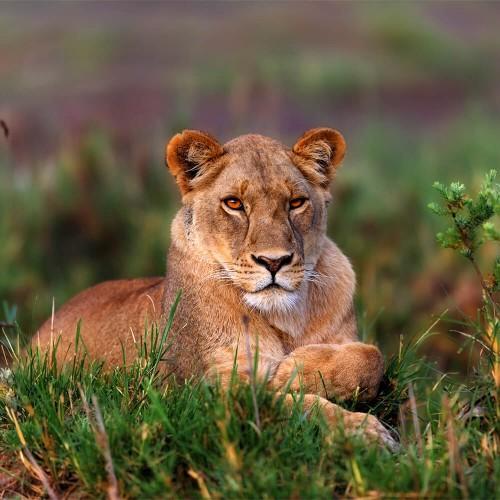 Safari to Tarangire and Ngorongoro - 2 Day