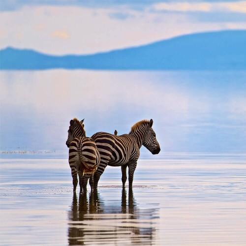Safari from Zanzibar - Lake Manyara and Ngorongoro - Two Days