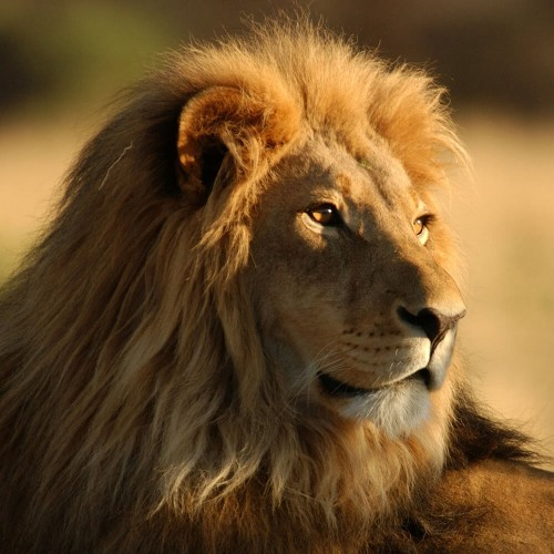 Four Day Tanzania Express Safari