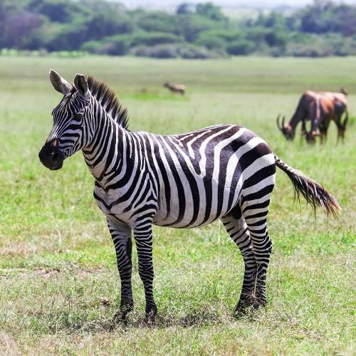 Wildebeest Migration Safari - Green Season - 5 days (April & May)