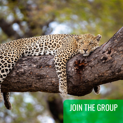 JOIN THE GROUP Four Day Tanzania Express Safari