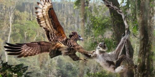 Bird watching in The Udzungwa Mountain National Park