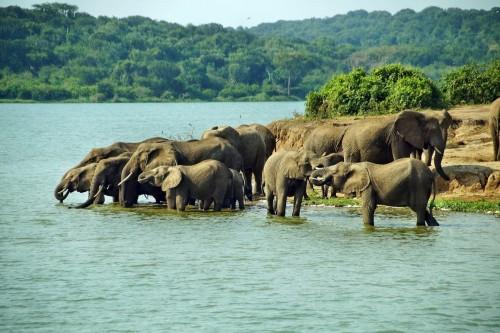 Eight Day Highlights of Uganda Safari