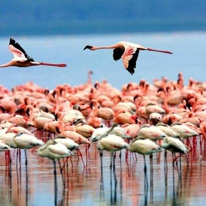 One Day Safari to Lake Manyara National Park