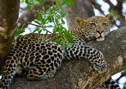Complete Tanzania Safari-8 Days
