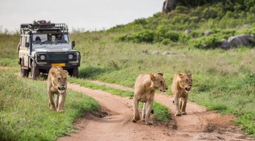 Big Five Safari- 6 days