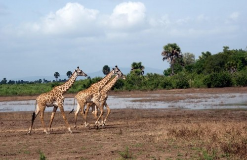 Five Day Selous Experience