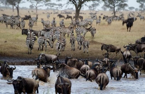 Nine Day Amazing Kenya and Tanzania Safari