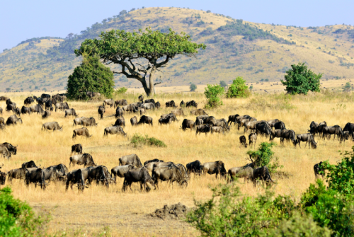 Wildebeest Migration Safari - Green Season -5 days