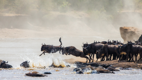 Wildebeest Migration  Safari Kenya & Tanzania  -6 days (June to October)