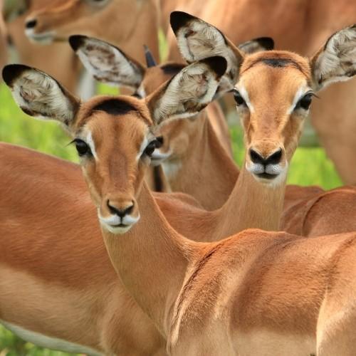 Safari from Zanzibar - Mikumi & the Udzungwa Mountains - Three Days