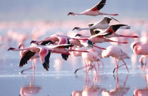 Nakuru Lake