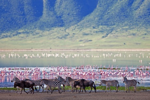 Safari to Lake Manyara and Ngorongoro-2 days