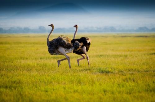 Wildebeest Migration Safari - Green Season -5 days (April & May )