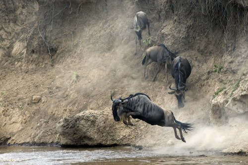 Wildebeest Migration Safari 2021 (All year round)