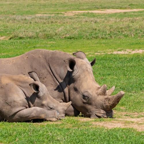 Two-Day Safari to Ol Pejeta