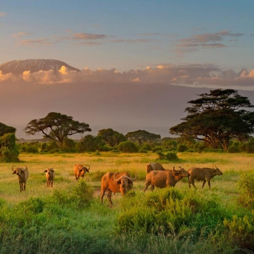 One Day Amboseli National Park Game Drive - Trip from Nairobi