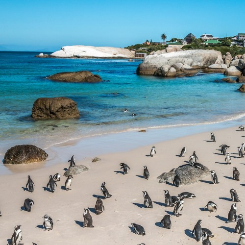 Marine experience in Cape Town