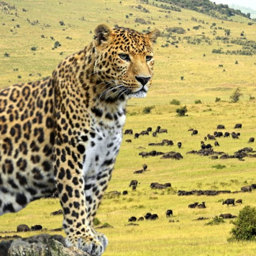 Fall in love with Maasai Mara - Three days by road from Nairobi