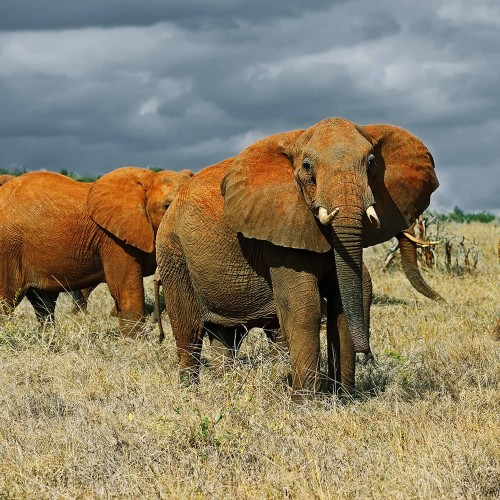 One day in Tsavo East National Park