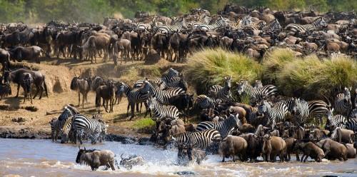 Nine Day Amazing Kenya and Tanzania Safari