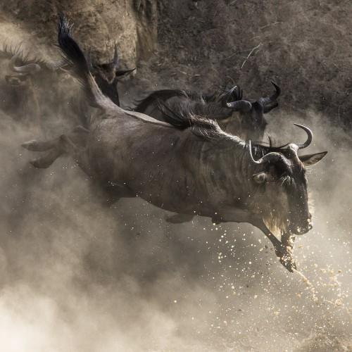 Safari from Mombasa - Wildebeest migration - Masai Mara fly-inn - 3 days