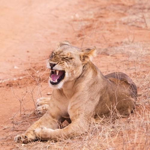 Enchanting Aberdare National Park & Ol Pejeta Conservancy - Three-day safari from Nairobi