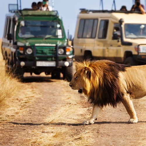 Game drive safari in Tanzania