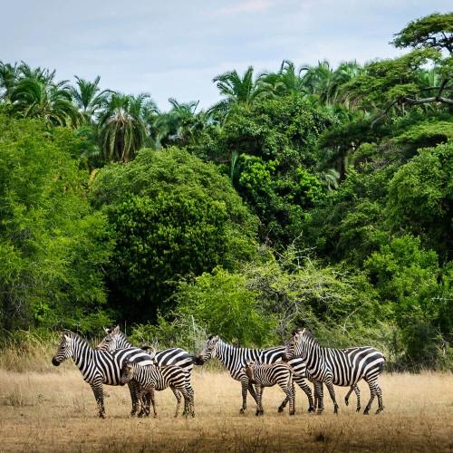 One Day Safari to Akagera National Park