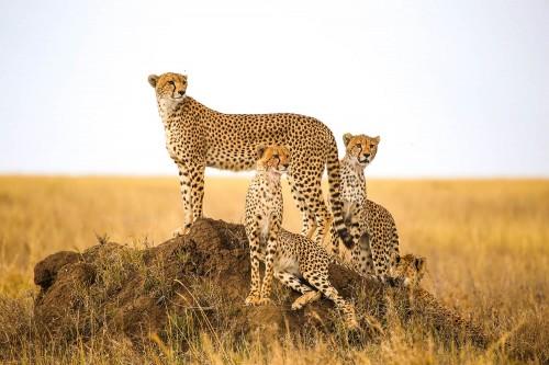 Safari from Zanzibar - Karibu Tanzania - Seven days