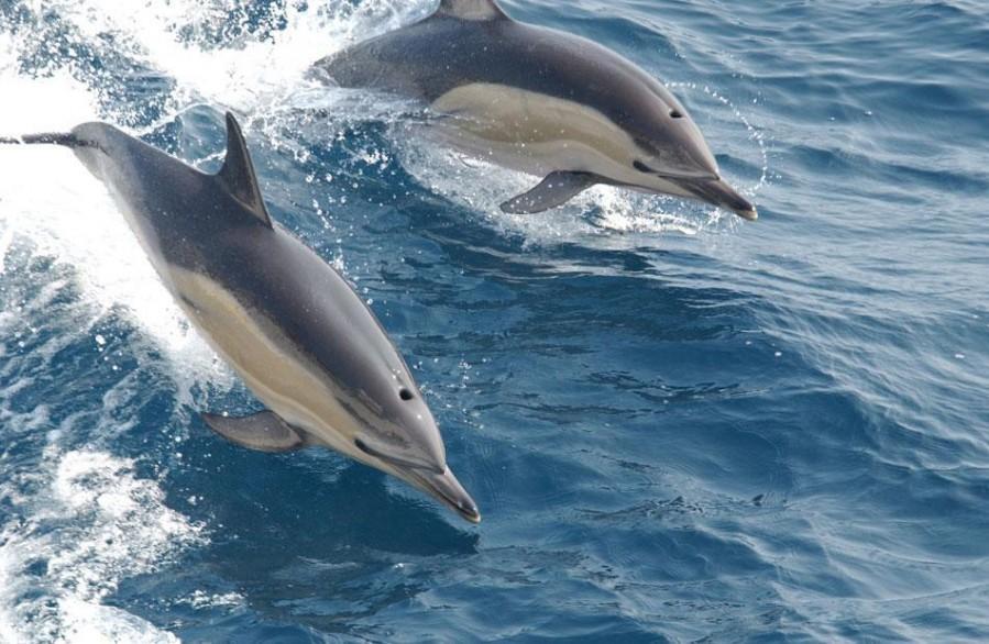 Zanzibar opazaovanje delfinov