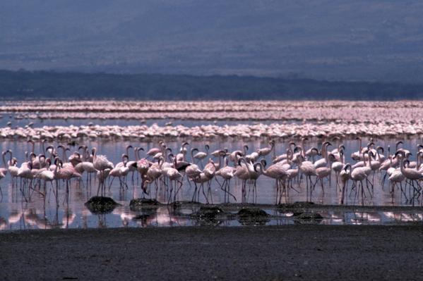 Narodni park jezera Bogoria