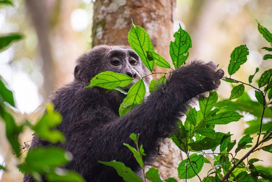 Narodni Park Nyungwe Forest