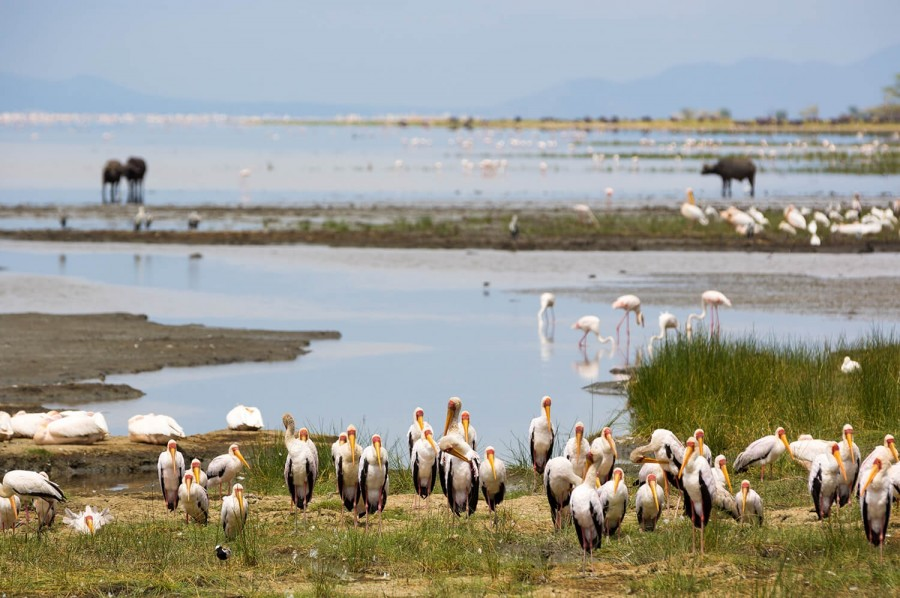 Safari to Lake Manyara