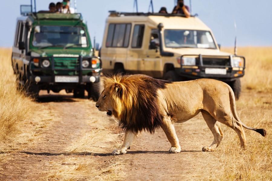 Game drive safari in Tanzania