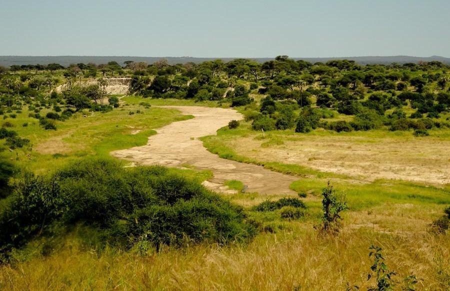 Wildebeest migration spectacle