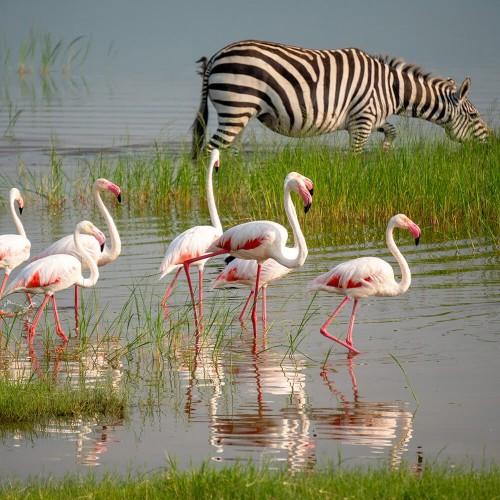 Konzervat Ngorongoro