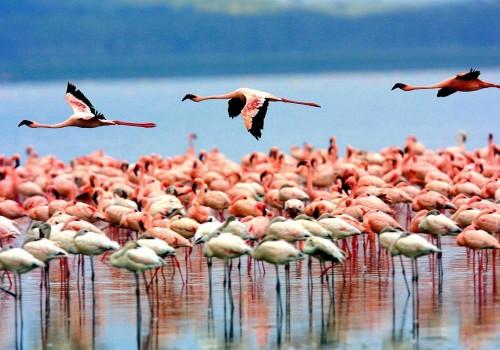 Bird Watching  in Lake Manyara National Park