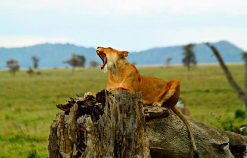 The Ngorongoro Crater Highlands