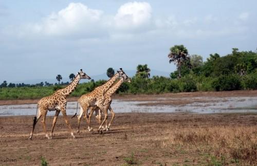 Južna Tanzanija- park  Selous -5 dni