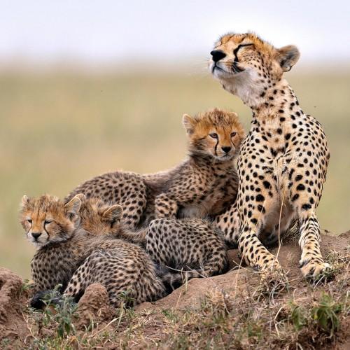 Ten Day Kila Kitu Safari