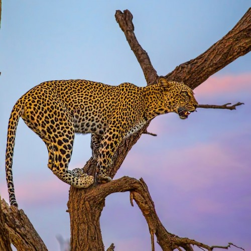 Safari po Keniji - 8 dni