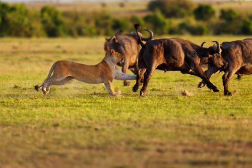 Eleven Day Kenya and Tanzania Odyssey Safari