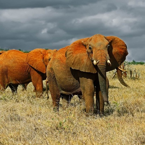 Four Day Red Elephant Safari - Tsavo West and Amboseli